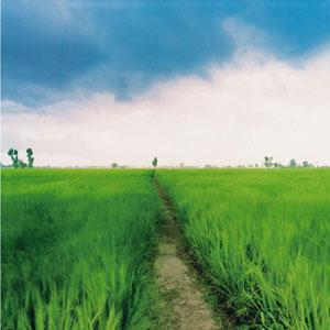 Back to the roots: A picture of Punjab by Max Kandhola.