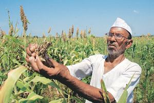 Fraught livelihood: Bhavsingh Harji Rathore's crops wilted due to a long period of deficient rainfall. And an inadequate farm loan waiver scheme meant the 60-year-old was unable to pay off his Rs1.5 l