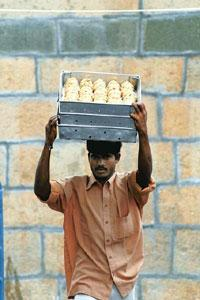 Divine discontent: A man carries trays of Tirupati laddus. Dinodia