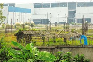 New plan: The deserted Tata factory in Singur. Even as farmers in Sankrail village wait for the proposed goods terminal promised by Indian Railways, it is preparing to build a coach factory on the Sin