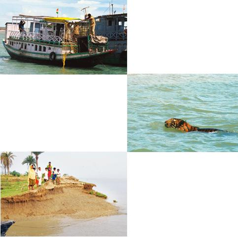 Tiger tales: (clockwise from top left) The boat that will release Tigress 001 into safe waters. Prerna Singh Bindra; Tigress 001, known from her microchip code. Prerna Singh Bindra; tigers strike terr