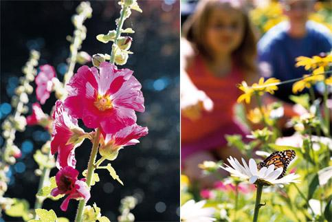 Flower power: (left) Hollyhock plants can grow up to 8ft; (right) easy-to-grow plants such as daisies and sunflowers are ideal for beginners.