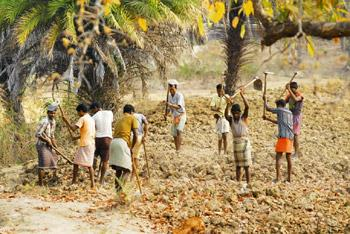 Empowering locals: Villagers of Kasola in Dantewada district of Chhattisgarh working in a project under the rural employment guarantee programme. The state is one of the six with the most rural poor i