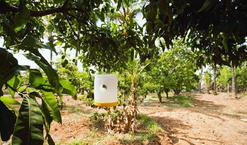 Alternate remedy: Pictured is a pest control system. Farmers are going organic to combat deteriorating yield caused by the use of chemicals. K. Ganesh/Mint.