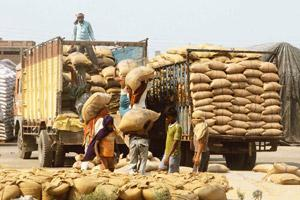 Supply plan: The Centre expects a bumper crop of 80 mt this year. Pankaj Nangia / Bloomberg