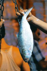 Mascot: Hilsa prices go up on the day East Bengal score a winning goal. Indranil Bhoumik / Mint