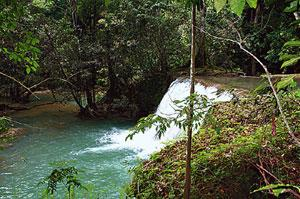 Into the wild: An excursion up the Black river till the YS Falls takes you through crocodile habitats. Thinkstock