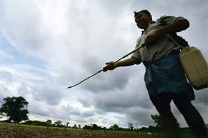 Controversial chemical: A file photo of a farmer spraying insecticide in his field. India is the world's largest consumer of endosulfan.