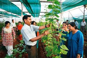 Growth story: Dyaneshwar Bodke tending to his plants at the Abhinav Farmers Club, which grows flowers and organic vegetables in polyhouses. Photo by Sandesh Bhandare/ Mint.
