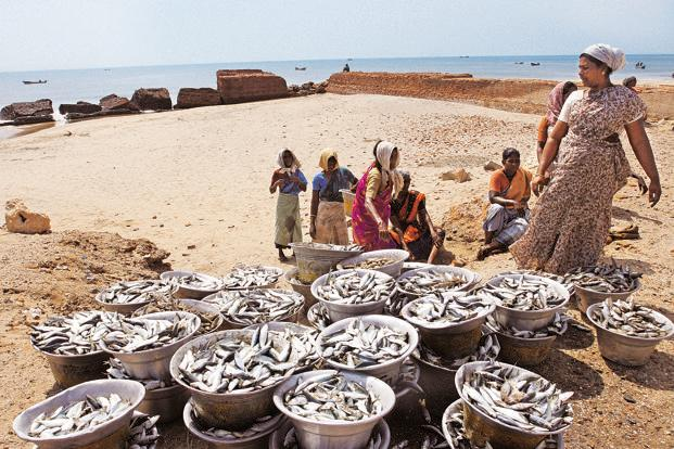 Where have all the fish gone? - Livemint