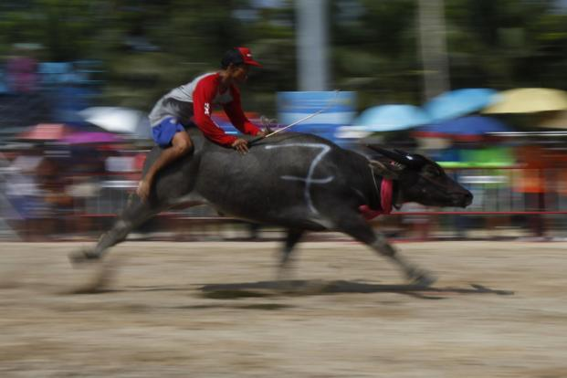 A jockey competes during Chonburi's annual buffalo race festival in Bangkok. The event, which also celebrates the rice harvest, dates back to the buffalo trade in Chonburi, once the trade centre of Thailand's east. Reuters