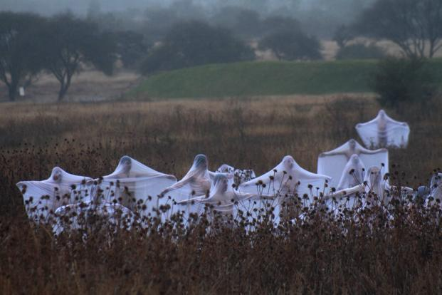 "Naked volunteers wearing white sheets pose for the early morning nude photo installation titled ""Spirits"" as part of the 'Festival de Calacas' (Festival of Skeletons) to commemorate the Day of the Dead in Mexico. Reuters"