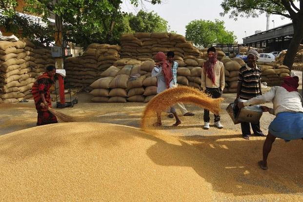India produced a record 93.90 million tonnes wheat in 2012 for an annual increase of 8%. Photo: Ramesh Pathania/Mint