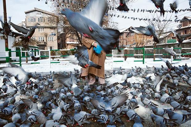A shot of pigeons at Khaniyar, Srinagar, in 2010. The man stands for the faceless Kashmiri, the one who happens to get shot just because he's there, says Mehra.
