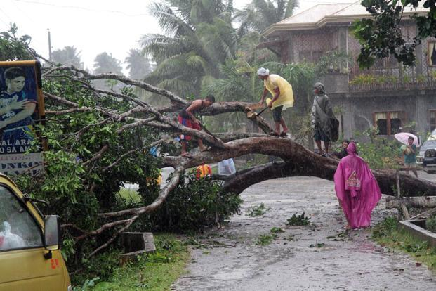Workers clear a road with a fallen tree after Typhoon Bophal hit the city of Tagum, Davao del Norter province, on the southern island of Mindanao on Tuesday.Photo: AFP