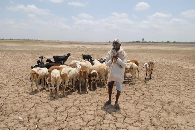 The immediate impact of the drought on the Indian economy is unclear at a time when persistently high food inflation has become a major headache for policymakers in New Delhi. Photo: Hemant Mishra/Mint