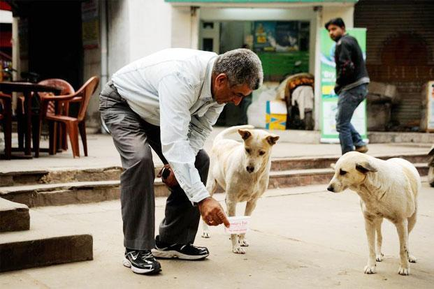 The other nuisance, apart from strays, are the well meaning folks who feed strays but won't let them into their homes or take care of their health by ensuring timely vaccination or even neutering. Photo: Pradeep Gaur/Mint.