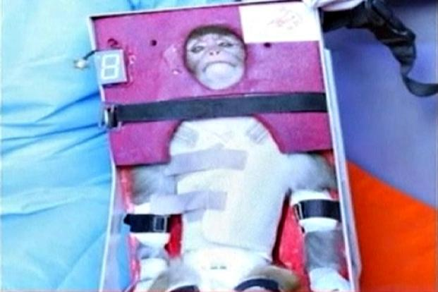 A still image from an undated video footage released on Monday by Iran's state-run English language Press TV shows a monkey that was launched into space. Photo: Reuters