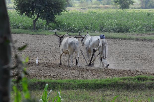 If the  scheme is implemented, it will benefit between 90 million and 100 million small and marginal farmers. Photo: Mint