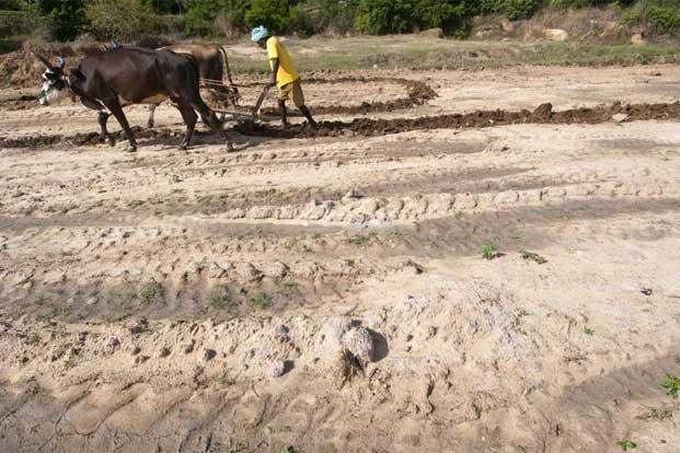 The drought has worsened in Maharashtra following failure of monsoon for the second consecutive year. Photo: Aniruddha Chowdhury/Mint (Aniruddha Chowdhury/Mint)