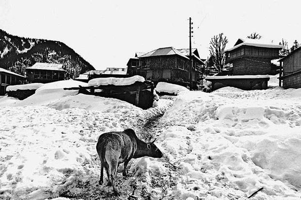 In winter, snow cuts off the village from the outside world. Photo: Harikrishna Katragadda.