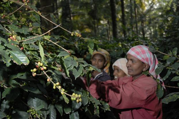 coffee plantation business plan in india