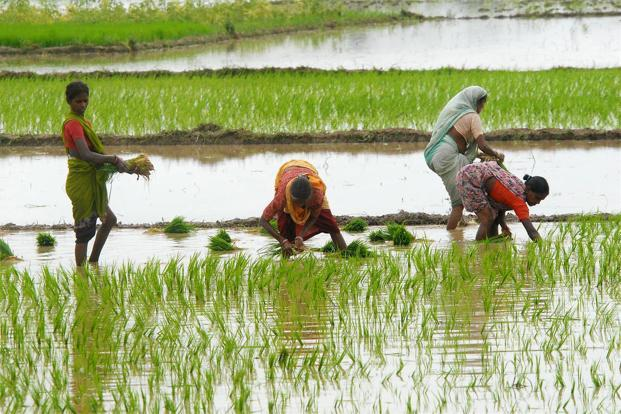 Rice harvest in India seen at record as early rains spur ...