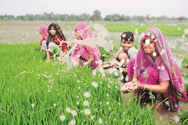 Between 2004-05 and 2009-10, while rural employment went up by 13 million for male workers, it declined by 19.5 million for rural female workers. Photo: Hindustan Times (Hindustan Times)