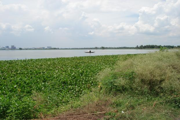 The situation is dire, according to environment ministry. 'Research suggests that one-third of Indian wetlands have already been wiped out or severely degraded,' it said in a recent report.  (The situation is dire, according to environment ministry. 'Research suggests that one-third of Indian wetlands have already been wiped out or severely degraded,' it said in a recent report. )