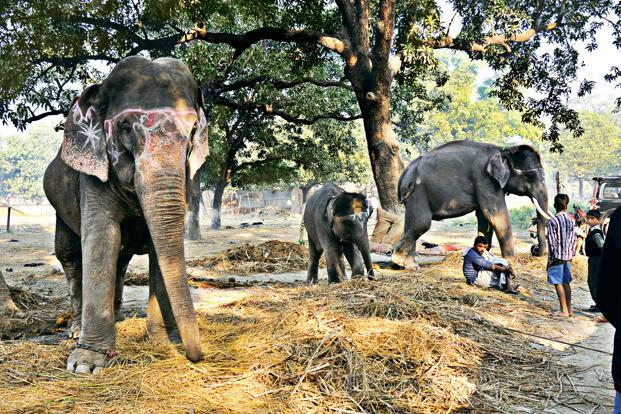 Though there is a clear interest in elephants from ordinary people, there is a lack of knowledge about the animals' needs. Photo: Abrar Ahmed/TRAFFIC India /WWF India