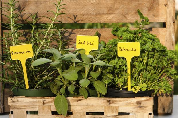 A Herb Garden Makes Complete Sense For Family Of Two Three Or Four