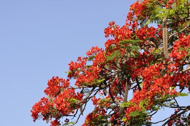 Swingers in greenacres florida