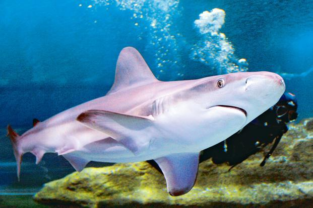 shark conservation essay Shark conservation act of 2010 long title: a bill to amend the high seas driftnet fishing moratorium protection act and the magnuson-stevens fishery conservation and management act to improve the conservation of sharks.