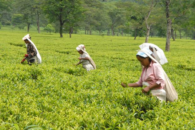 Image result for Demand dignity for tea workers on Tata tea plantations in Assam