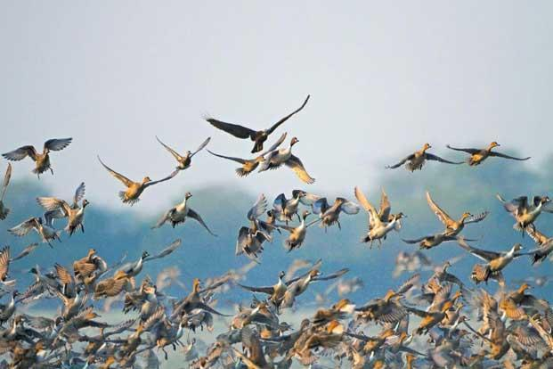 essay on common birds of bangladesh A common reaction that some people might have about the question is the symbolism of birds is discussed in the essay because the recurring images of birds have a.