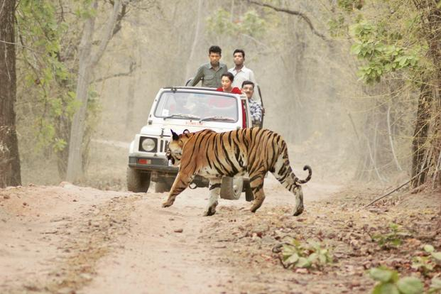Mitigating human–wildlife conflict is a priority in wildlife conservation and management, particularly in a country like India. Photo: HT