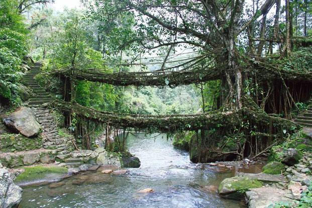 Cherrapunjee, Meghalaya: Bridge over quiet waters - Livemint