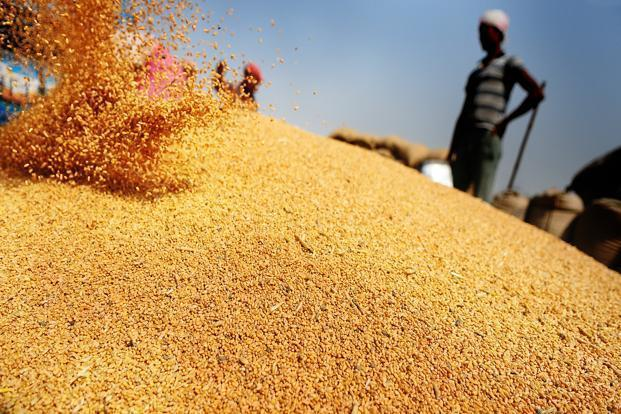 India Looks Set To Harvest Bumper Wheat Crop In 2015 border=