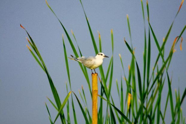 Birdwatching: Flying wild