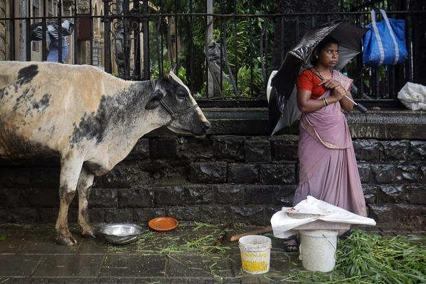 President Pranab Mukherjee last week gave his assent to the Maharashtra Animal Preservation Bill, which had been pending for 20 years. Photo: Reuters (Reuters)