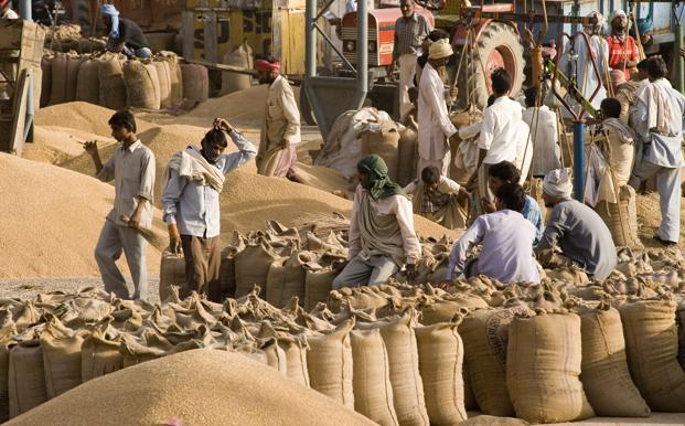 Wheat exports from India tumbling to 4-year low on glut