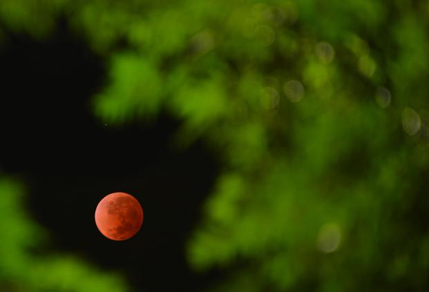 During the eclipse, the moon looks red because sunlight has passed through the Earth's atmosphere, which filters out most of its blue light. Photo: AFP