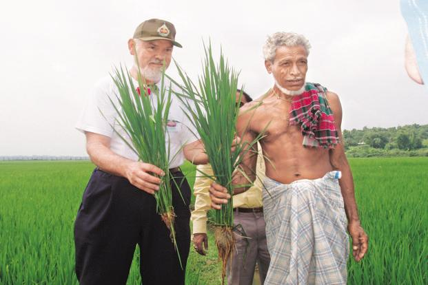 Prof. Uphoff and a farmer compare the root growth of a conventionally-grown rice plant and an SRI plant in Tripura.
