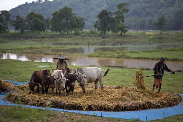 India set for record food imports as Modi grapples monsoon risks
