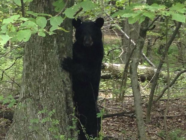 Bears too get scared by UFO: study