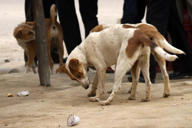 The World Health Organization wants to eliminate rabies from the South-East Asia region by the year 2020. It is a goal that India is unlikely to meet, public health experts say. Photo: HT