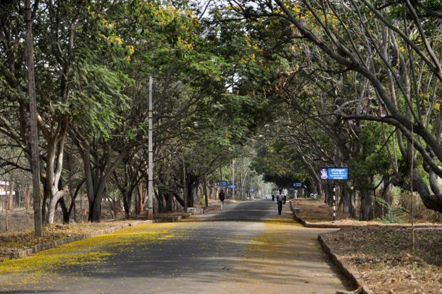 The new study reveal that there are 3.04 trillion trees, which comes down to 422 trees per person. Photo: Aniruddha Chowdhury/Mint