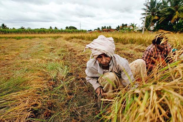 Agriculture industry development of country
