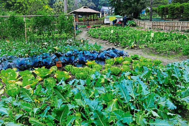 organic kitchen garden sikkim against the machine livemint 1227
