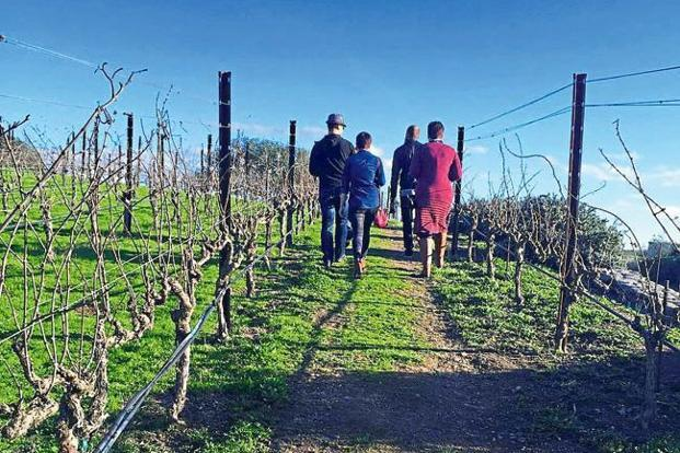 At the Nicholson Ranch, the entire process from planting the grapes to bottling the wine is done in-house. Photo: Shoba Narayan